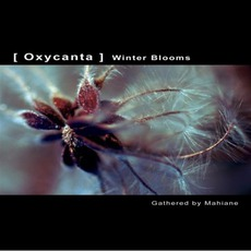 Oxycanta: Winter Blooms