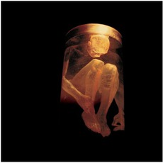 Nothing Safe: The Best Of The Box mp3 Artist Compilation by Alice In Chains