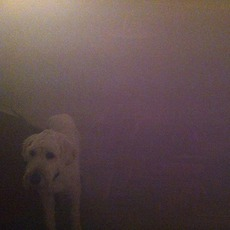 Dog In The Fog mp3 Album by Oneohtrix Point Never