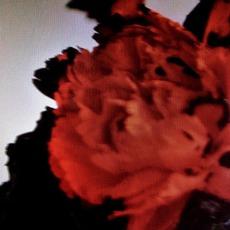 All Of Me (Tiesto's Birthday Treatment Mix) mp3 Single by John Legend