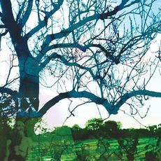 Wimble Toot EP mp3 Album by Banco de Gaia