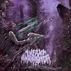 The Elysian Grandeval Galèriarch mp3 Album by Infant Annihilator