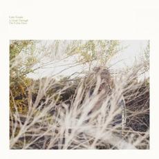 A Hand Through the Cellar Door mp3 Album by Luke Temple