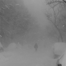 Wild Love mp3 Album by Cashmere Cat