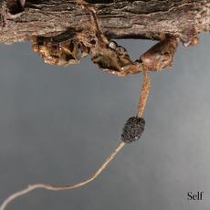 Self mp3 Album by Terzij de Horde