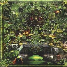Intonarumori mp3 Album by Material