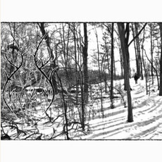 Forest Dweller mp3 Album by Vow of Thorns