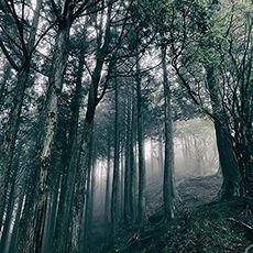 In the Dark Woods mp3 Album by Akira Kosemura