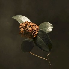 Young Sick Camellia by St. Paul And The Broken Bones