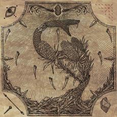 Renewal mp3 Album by Scoparia