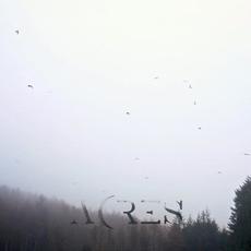 Solace mp3 Album by Acres