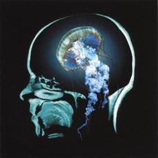 Undulating mp3 Album by Lesley Kernochan