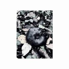 Black Phoebe mp3 Album by Black Phoebe