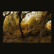 Fallen Trees mp3 Album by Lubomyr Melnyk