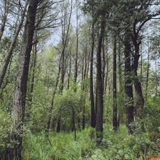 Evergreen Oak mp3 Album by L.A.
