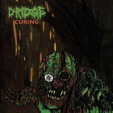 Curing mp3 Album by Dridge